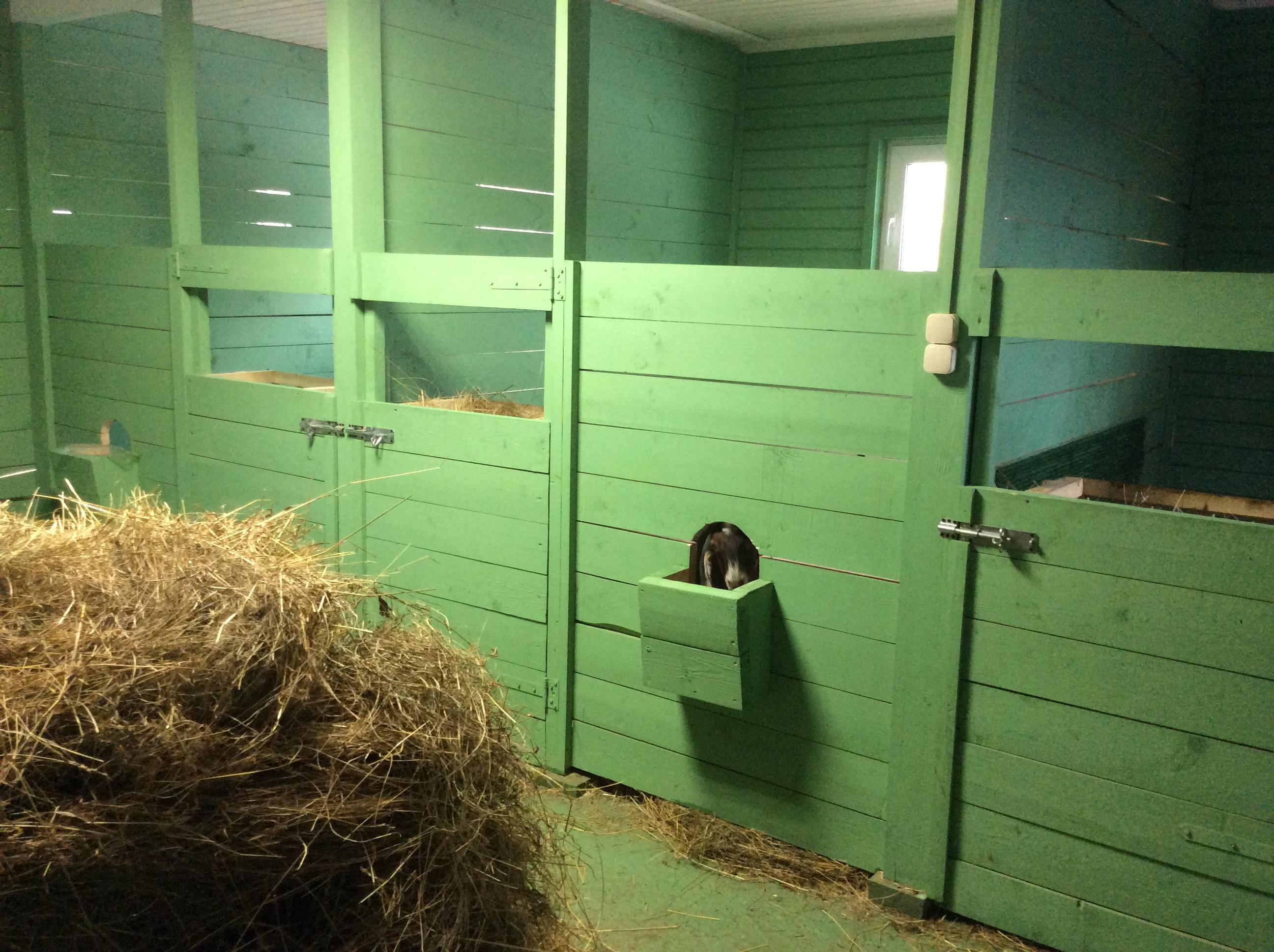 помещение для содержания коз фото